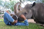 Rescue Fund Launched After Beloved Rhino Dies