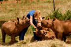 Wildlife rehabilitation courses at SanWild